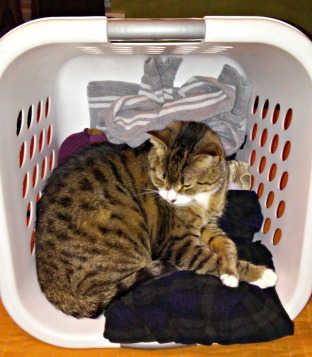 Oscar in laundry